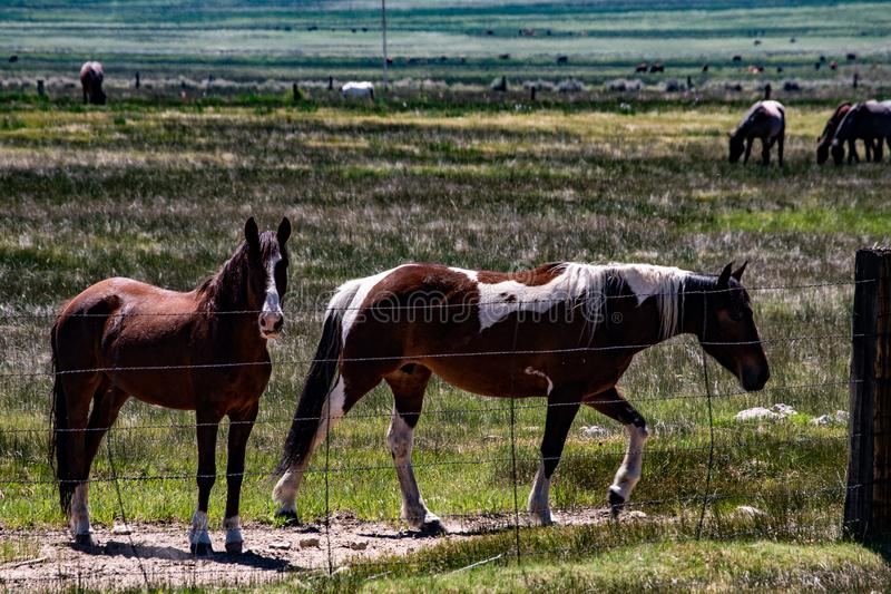 View of Horses Grazing At The Hunewill Ranch Near Bridgeport, California in late spring stock images