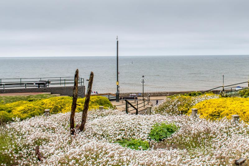 A view of hunstanton beach from the adjacent garden. Beside the beach royalty free stock photography