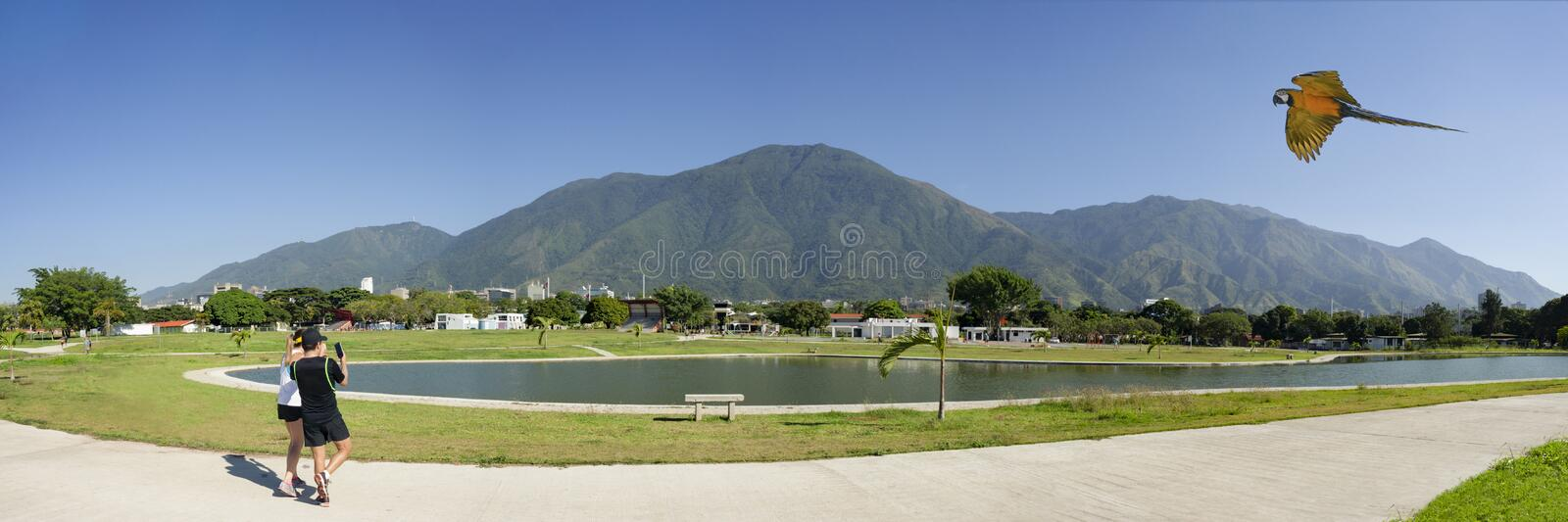 View of the iconic Caracas mountain el Avila or Waraira Repano and flying macaw.  royalty free stock photo