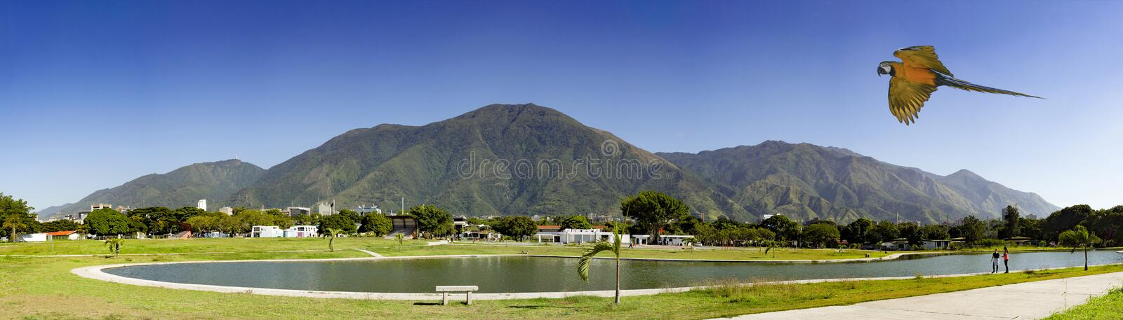 View of the iconic Caracas mountain el Avila or Waraira Repano and flying macaw.  royalty free stock photos