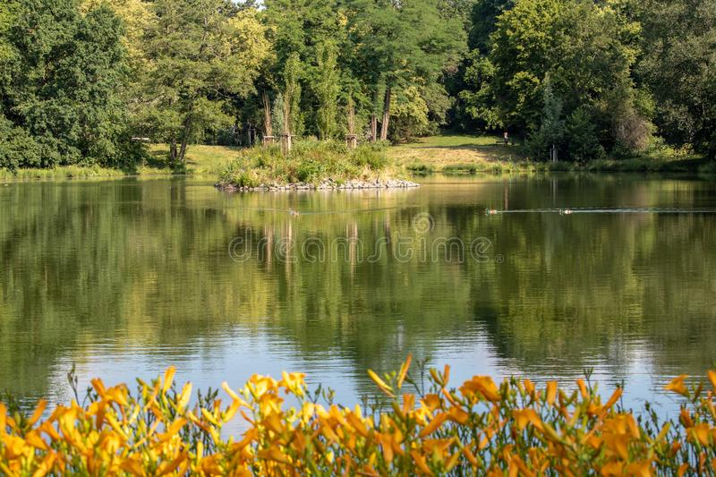 View of an idyllic park landscape in Leipzig,Germany. With a pond with island, with blurred yellow plants in the foreground royalty free stock photo
