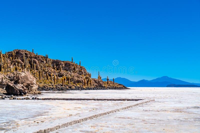 View of Incahuasi Island or Cactus Island in Uyuni Salt Flat. In Bolivia stock images