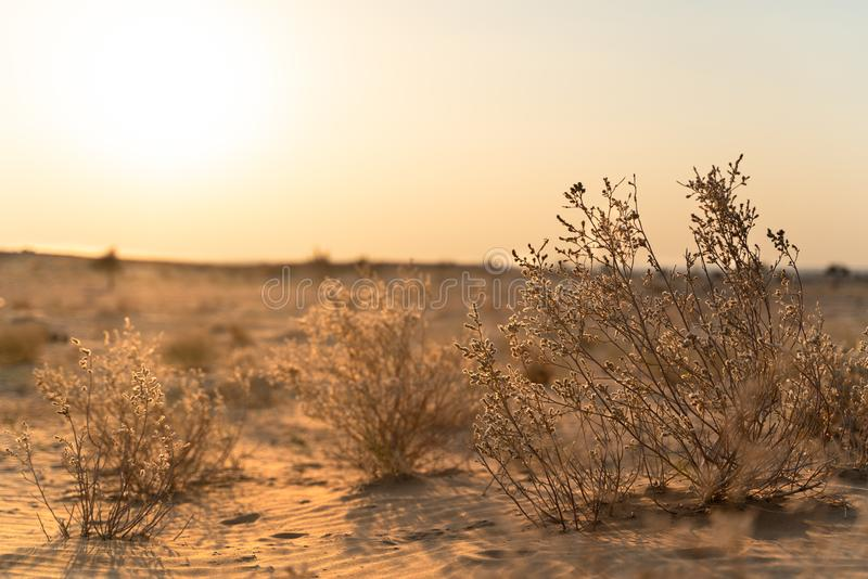 The view in indian desert royalty free stock photography