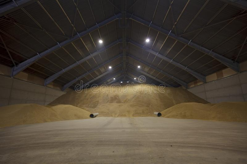View inside a large grain drying store, with a huge pile of grain cereal. View inside a large grain drying store, with a huge pile of golden grain cereal stock images