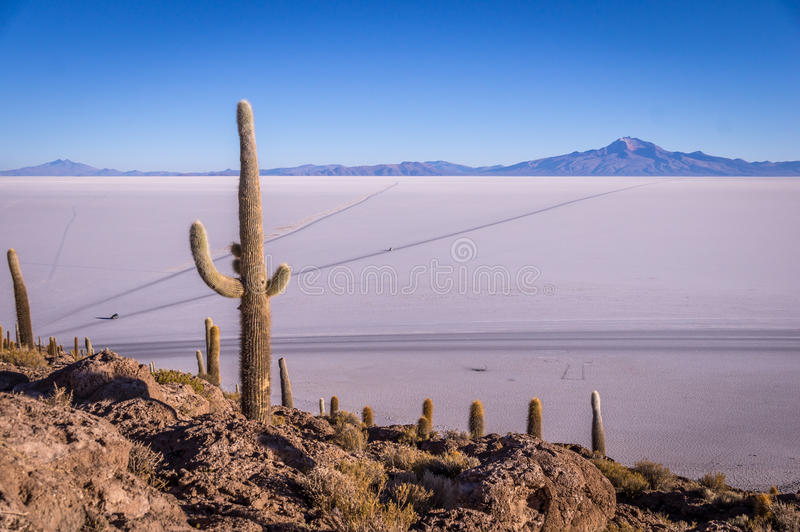 View from Isla Incahuasi, Uyuni, Bolivia. Sourrounded by the Salar de Uyuni salt lake the view from the cactus island Incahuasi near Uyuni, Bolivia is impressive stock photo