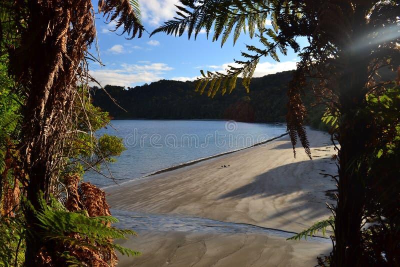 Stewart island Rakiura track, isolated bay. View on isolated sand beach in STewart island, remote bay, subtropical bushes and forests, sunset light, New Zealand stock photos
