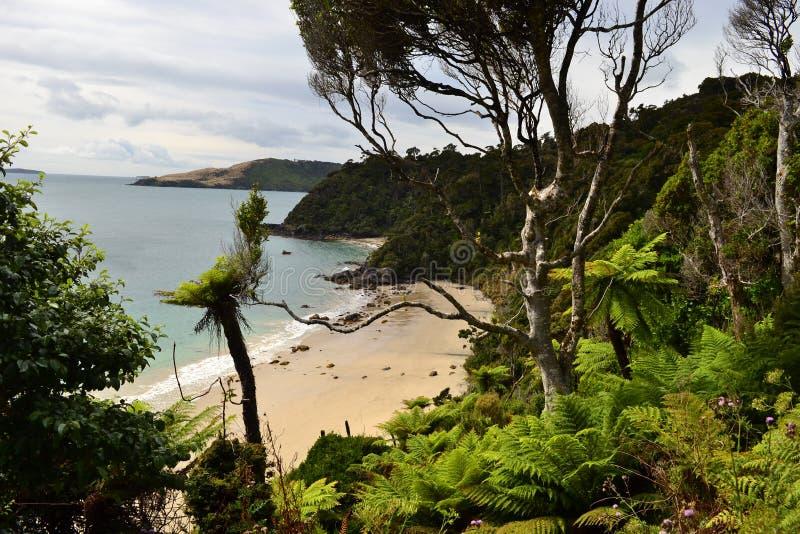 Stewart island Rakiura track, isolated bay. View on isolated sand beach in STewart island, remote bay, subtropical bushes and forests, sunset light, New Zealand stock photography