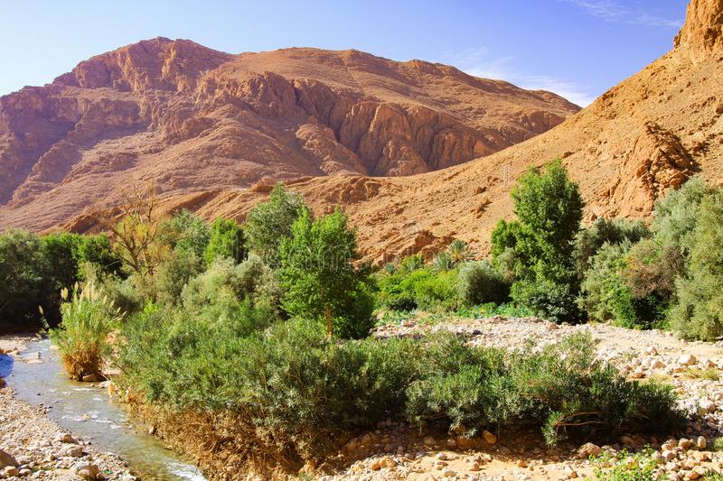 View on isolated small creek green oasis valley in desert of limestone and clay mountains against blue sky. Todhga river Todra valley near Tinghir - Morocco royalty free stock photo