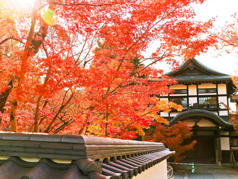 View of the Japanese temple in autumn in Kyoto, Japan. royalty free stock photos
