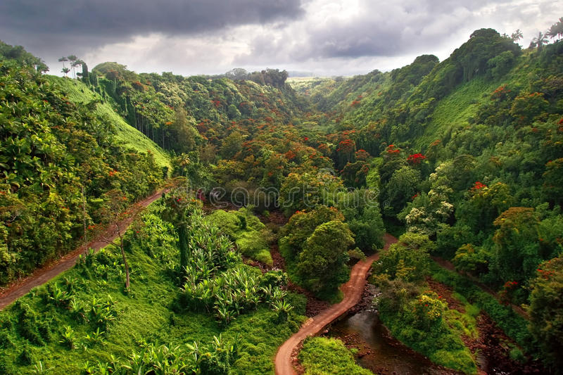 View on jungle royalty free stock photography