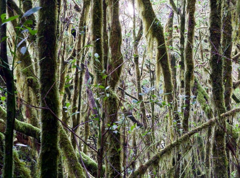 View of a jungle. Of La Gomera stock photos