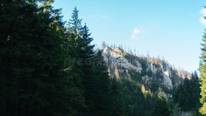 View of Koscielisko Valley in Polish Tatras. View of a Koscielisko Valley in polish Tatras Poland stock images