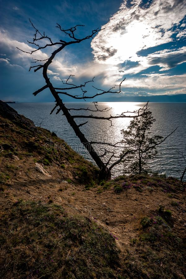 View of Lake Baikal with a tree on the very edge of a rocky cliff. On the blue sky behind the clouds is the sun. Backlight with sun rays through the clouds royalty free stock photo
