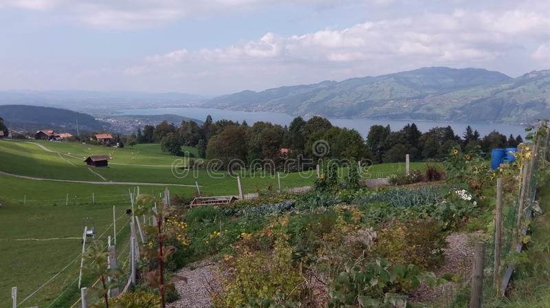 View at lake, mountains and vegetable garden in Switzerland stock photo