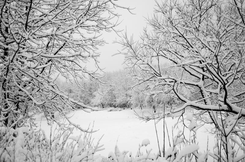 View of the lake through a snowy window royalty free stock image
