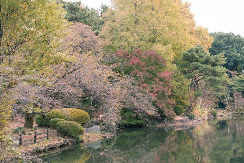 View of a lake and trees during autumn in Shinjuku Gyoen National Garden, Tokyo, Japan. stock photos