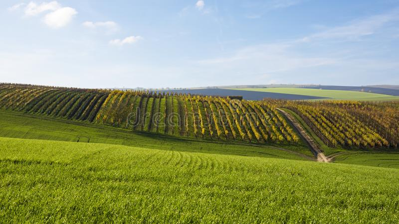 View of a landscape with a field and a vineyard in autumn in the. South Moravia under a blue sky with clouds royalty free stock photo