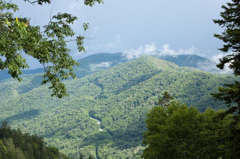 Scene from Great Smokey Mountains National Park royalty free stock photo