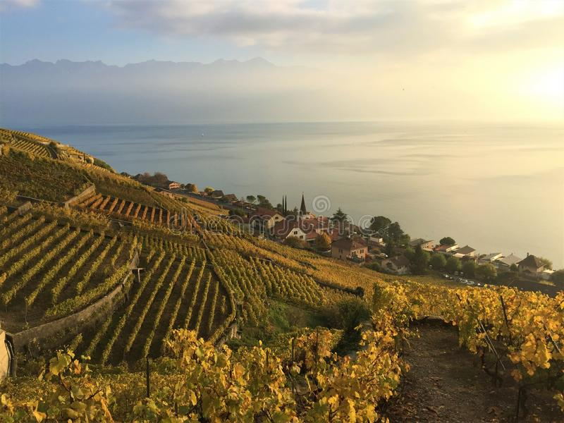 View of the Lavaux terraces, lake Léman and mountains in the background, Switzerland stock images