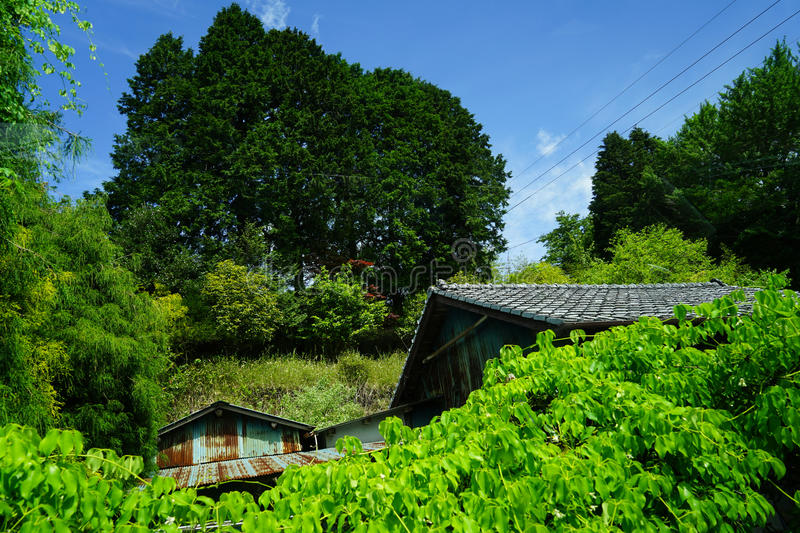 View of local village houses roof among green plant and mountain along scenic route on sunshine day, Yufuin stock photo