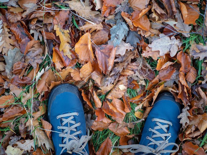 View looking down at a pair of blue mens walking boots in autumn. Al leaves stock photos