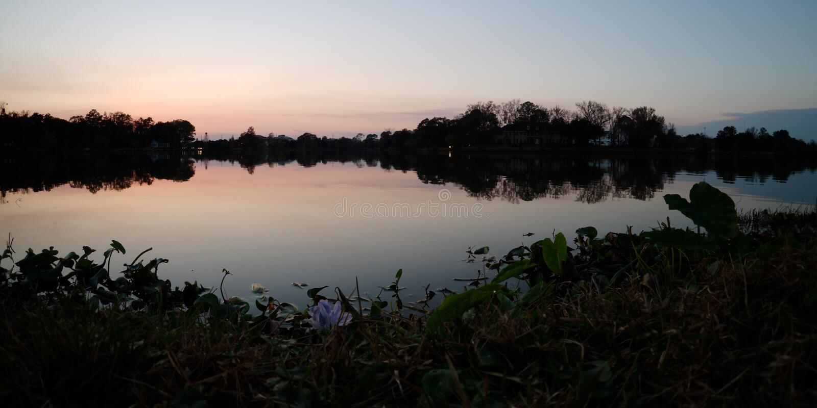 LSU lake and water plants at dusk. View of LSU lake and water plants at dusk, Baton Rouge, Louisiana, USA royalty free stock images