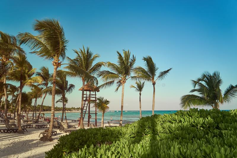 View at luxury resort hotel beach of tropical coast. Place of lifeguard. Leaves of coconut palms fluttering in wind royalty free stock image