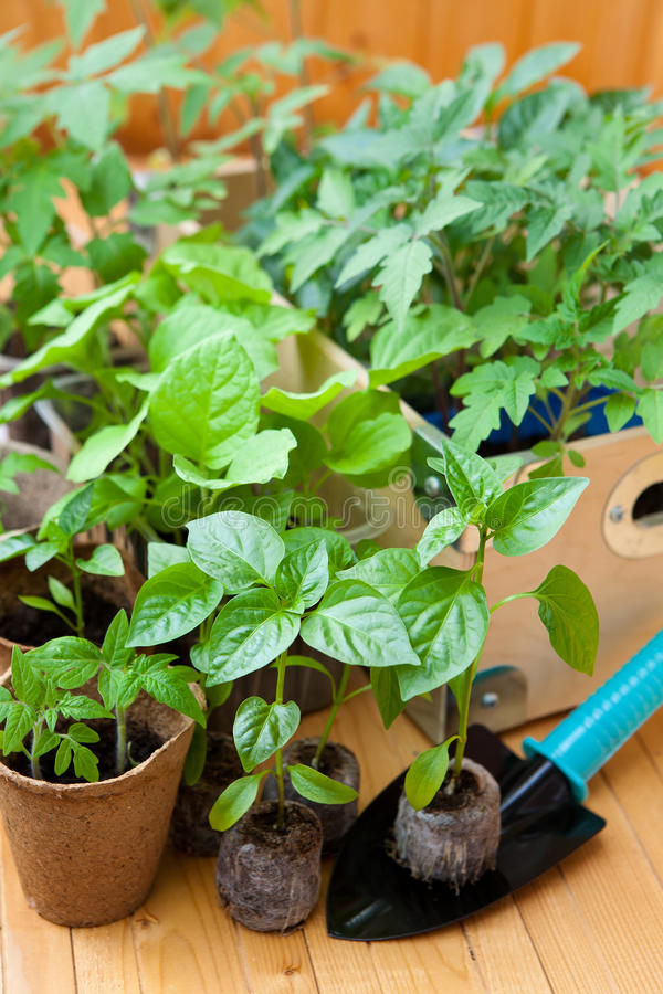 View of the many pots with seedlings stock images