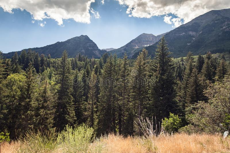 View of meadow, trees, and mountains in American Fork Canyon stock image