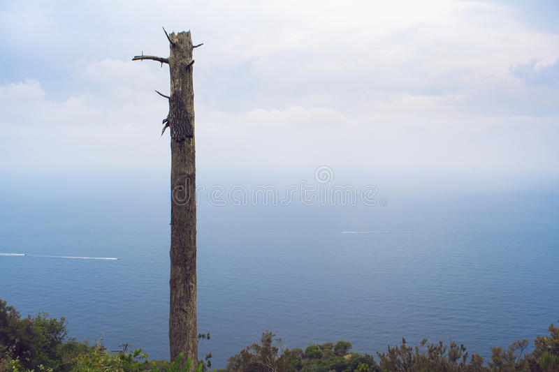 View of the Mediterranean Sea on a misty day. Dead tree in foreground. View of the azure blue Mediterranean ocean on a misty day. Dead tree in foreground. Boats royalty free stock photos