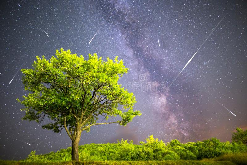 Green tree Milky way night sky falling stars stock photography