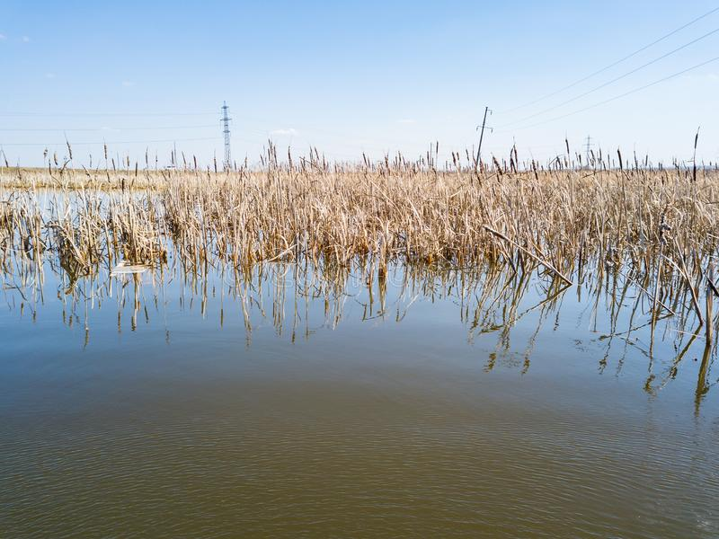 A view from the middle of the lake on the water in which spring dried yellow reeds are reflected under a clear blue sky without. Cloud on warm spring sunny day stock image