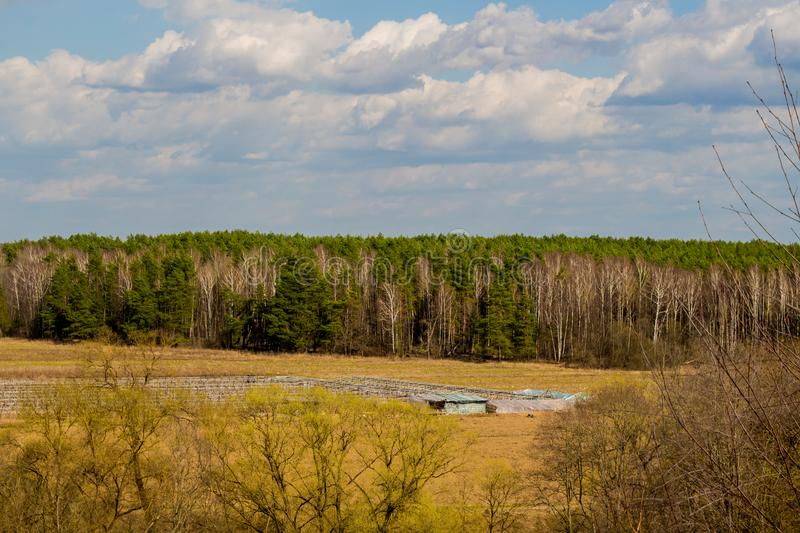 View of mixed forest. On the horizon, day stock image