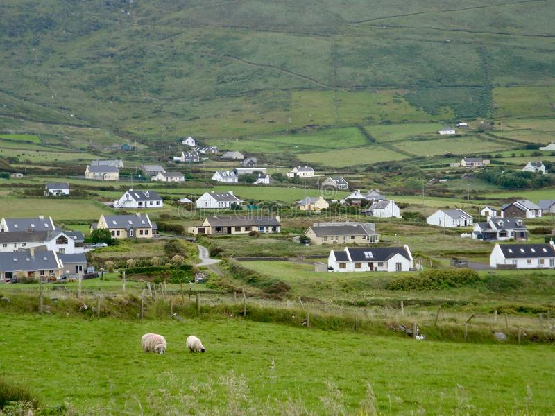 View of a modern Irish landscape with homes, farms and sheep in the foreground stock photography