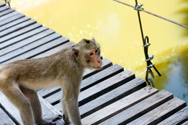 View of the monkey ball on the ground. Nthailand stock image