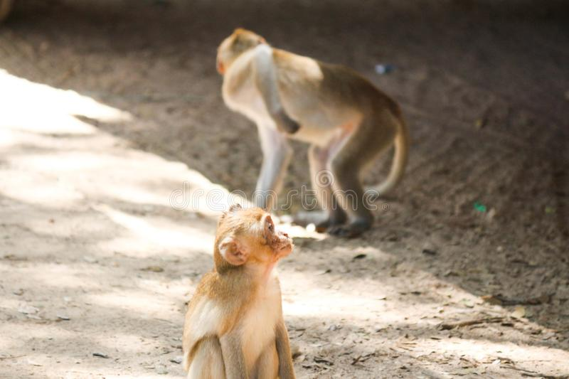 View of the monkey ball on the ground. Thailand stock photos
