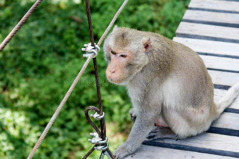 View of the monkey ball on the ground. Thailand royalty free stock images