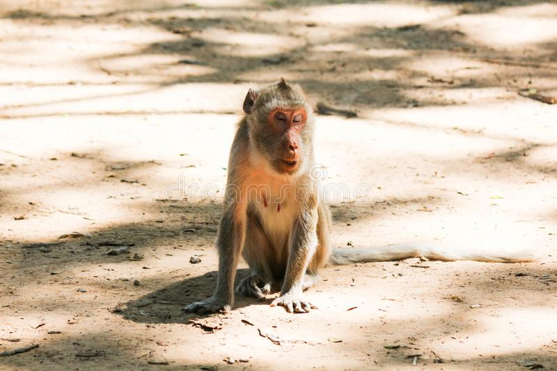 View of the monkey ball on the ground. Thailand stock photo
