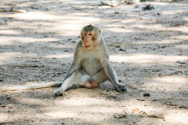 View of the monkey ball on the ground. Thailand stock image