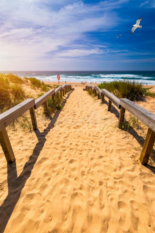 View of the Monte Clerigo beach with flying seagulls on the western coastline of Portugal, Algarve. Stairs to beach Praia Monte stock image