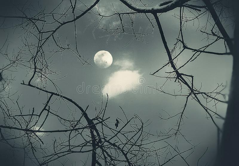 A view of moon through leafless branches. An illustrative image of a full moon through beautiful leafless branches royalty free illustration