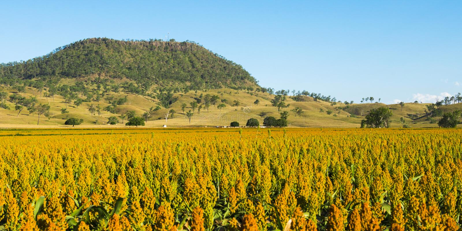 View of Mount Walker and Sorghum stock images