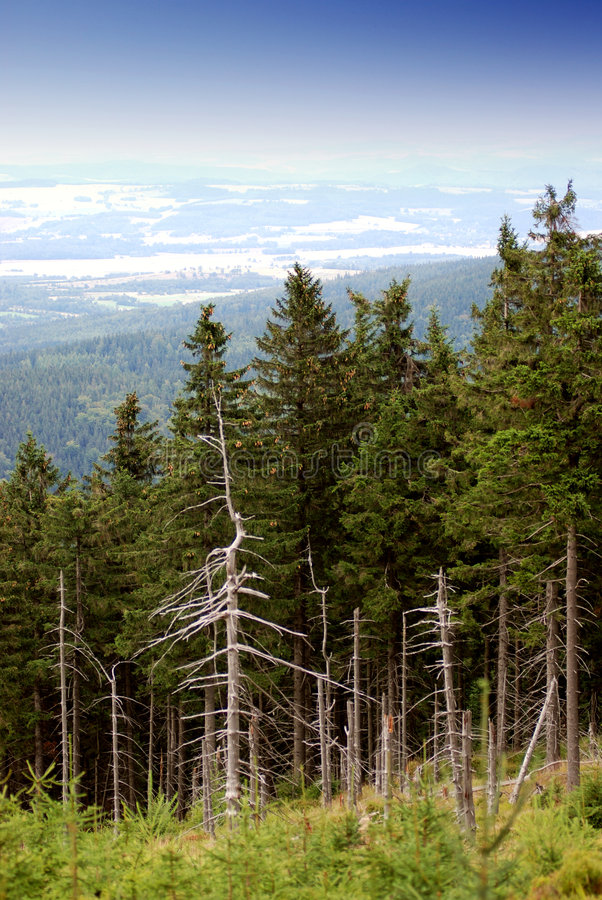 Download View on the mountain stock photo. Image of mountain, tree - 2997030