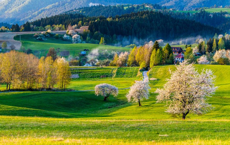 view of mountain field and meadow stock photos
