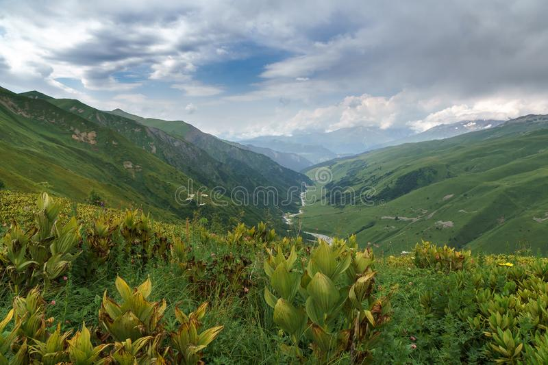 The river flows in a green valley between the mountains, Georgia, Svaneti. View of the mountain green valley from a height. Far down the mountain river flows stock photos