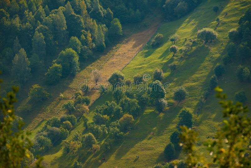 View of mountain landscape at sunrise, beautiful green t. Amazing view of mountain landscape at sunrise, beautiful green trees texture royalty free stock photo