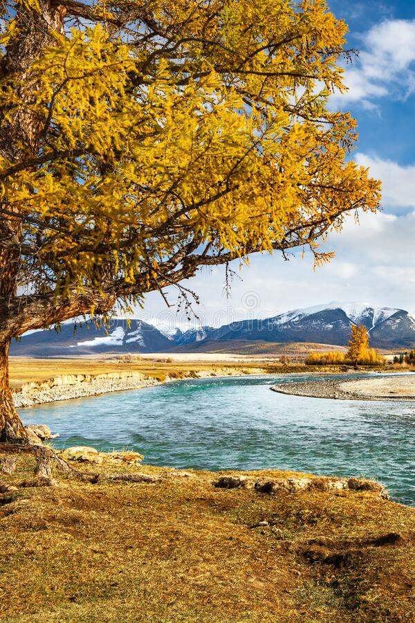 View of the mountain range and the river with a beautiful tree in the foreground royalty free stock photography