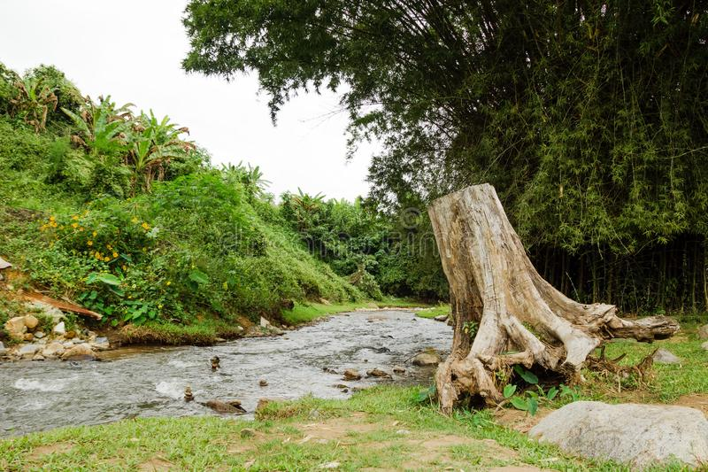 View on a mountain river and big stump in rainforest in cloudy weather. Chiang Dao, Thailand stock photo