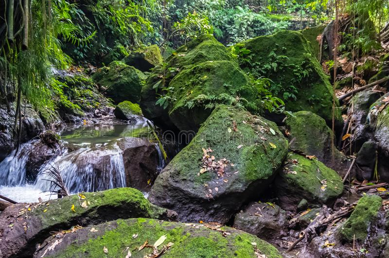 View on a mountain river in Sacred Monkey forest in Ubud. View on a mountain river  and waterfall in Sacred Monkey forest in Ubud, Bali, Indonesia stock images