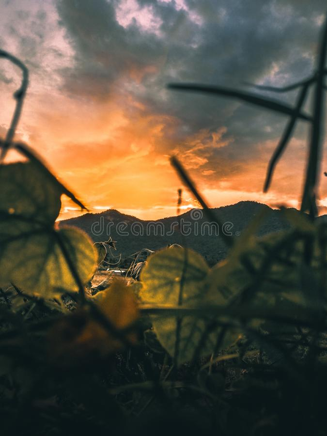 View of the mountain during sunset. stock photo